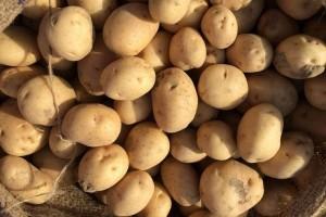 白薯的营养价值白薯的功效有哪些